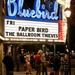 Paper Bird Bluebird 11.25.2016-5